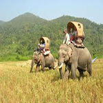 The Elephant Journey 11D10N